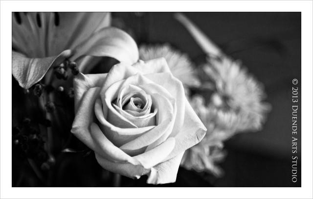 Rosa Mystica 4291a