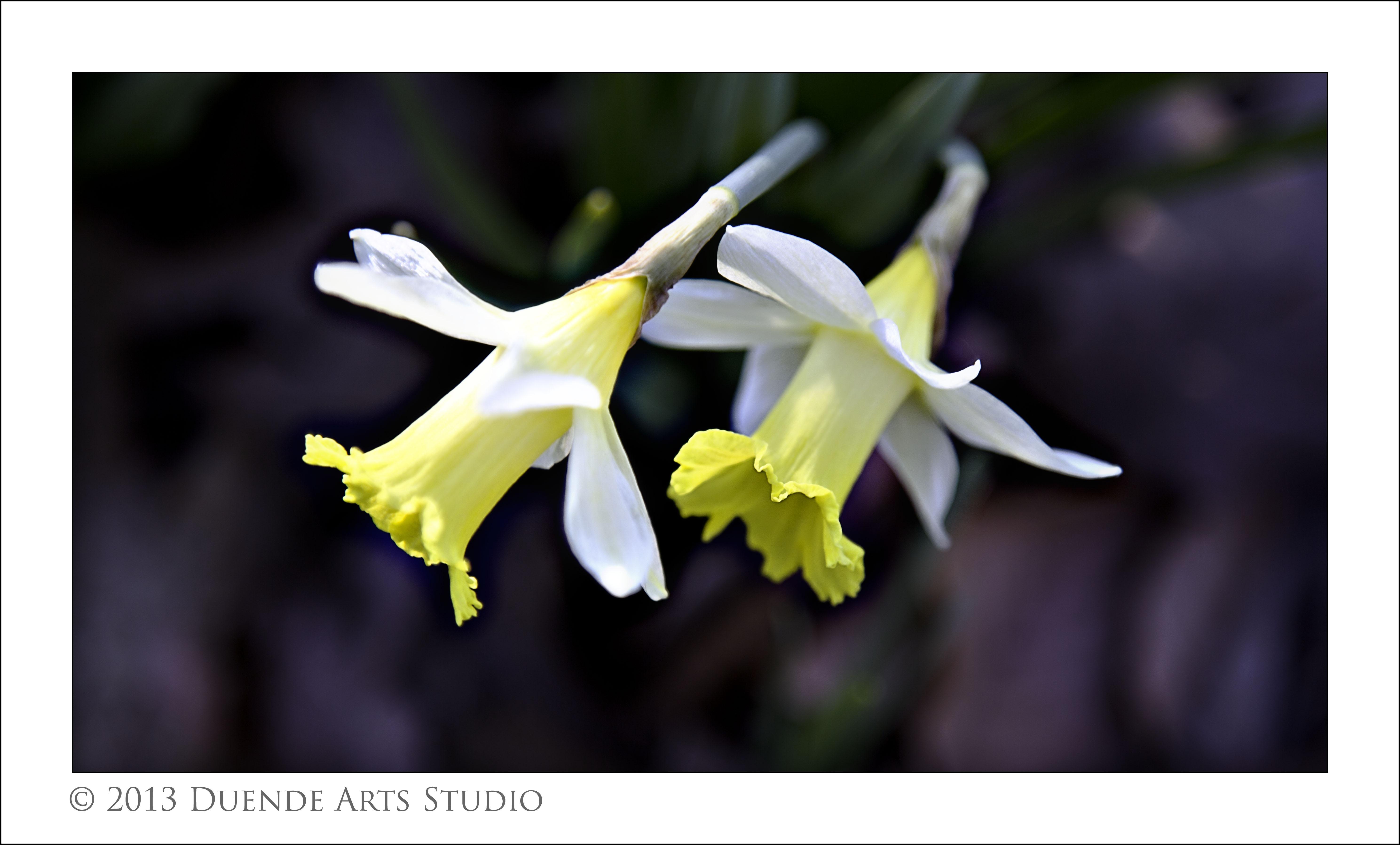 In Search Of Spring Orlando Gustilos Blog