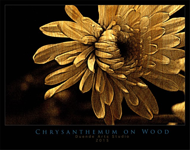 Chrysanthemum on Woodsss